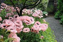Jardins e afins, Flores e Frutos