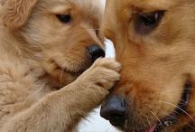 Doggies :) / by Elise Grzebieniak