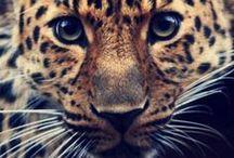 Animals / by Rebecca Johnson