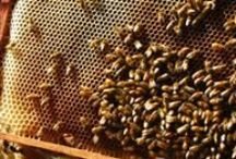 Beeswax Information