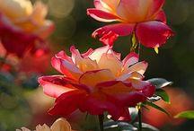 Garden / by Sarah Blakeney Willis