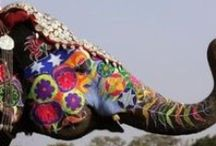 Elephants / by Rose Taylor