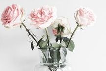 Flowers / Beautiful flowers inspire us