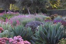 backyard/ garden