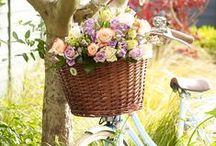 Beautiful Blooms / Make someone's day with a gift from our flowers and plants range. http://bit.ly/1EjnGqN / by M&S