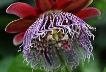 Garden stuff :)  / by Hannah Lou