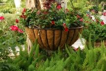 Gardening / by Marsha Lynn