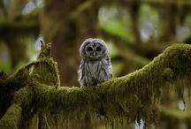 Wise, Wonderful,Whooo Whoo. . . / by Marsha Lynn