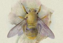 The Bee's Knees! / by Marsha Lynn