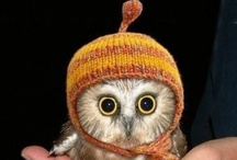 Owls / I think I love owls