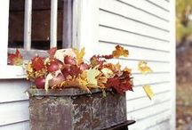 Fall / seasonal ideas, decor, printables, Halloween costumes / by Stephanie Connor