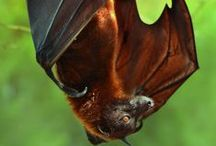 The Delicacy of Bats / by Denise Greenberg