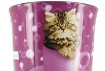 Cats / Lovable cats