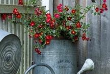 Gardening / by Pam Loving