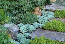 gardening / by Sharon Olliffe