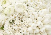 White Flowers / by Jordana - White Cabana