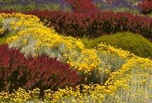 Landscaping & Gardening / by Laranda Massey Burrow