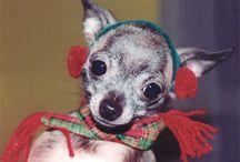 Pets & Critters / by Laranda Massey Burrow