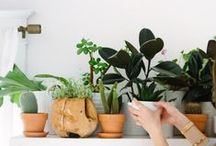 garden & plants / gardening, outside, balcony and green plants...