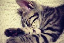 Animals & Pet / Pet Life