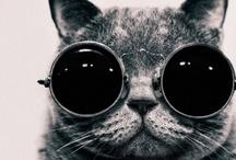 =^..^=  cats! / by Lauren Loria