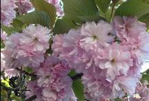 Flowers in Japan / flowers