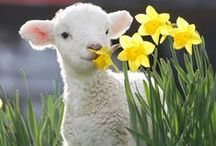 6 Babies / lambs, kittens, humans, giraffes, dolphins, etc :: Pinterest Project for chn