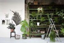 ● plants ● / by nada jaffal