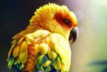 4 The Birds / Birds/Parrots