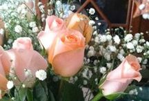 Roses for my Soul / by Brooke Hanna-Santalucia