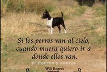 """# ANIMALES :: PERROS CHIHUAHUAS / """"El pequeño mundo del Chihuahua"""" .- Fotos y videos de perros Chihuahueños"""