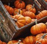 zucche - pumpkins