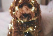 Puppies / Animals