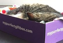 What's In a My Purrfect Gift Box? / This board shows items found in a My Purrfect Gift Box.  The UK's only subscription box for people crazy about cats.  Cat lover gifts delivered monthly with optional kitty treats too.