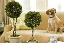 Dogs & Condo Decor / Let me show you some of the coolest ideas to incorporate you PET in your home deco.  / by Tail-Waggers