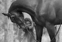 Horses / by Me-Lanie Mattox