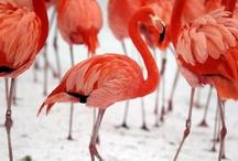 flamingo paradise...