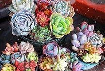 Gardening / Inspiration, photos, tips and tricks, plants, and more... #greenthumb