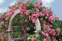 Flower Gardens / by Mari Foley Reiling