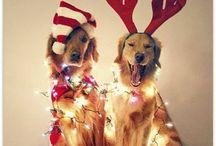 Christmas  / by Meagan Garr