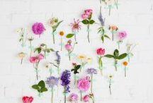 ✿ Floral / flower inspiration - arrangements - tutorials - herbs - indoor plants - terrariums