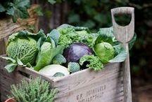 ❁ Gardening / Gardening tips, tricks and inspiration
