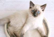 ♡ Pet / Pet tips, tricks and ideas!