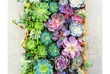 Green thumb / by Meagan Garr