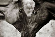 Horse of course  / by Meagan Garr