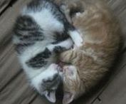 Cats <3 / Kittyyyyyyyyyyyyyyyys Catsssssssssssssssss