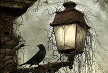 Crows.... / by Amy Myrick