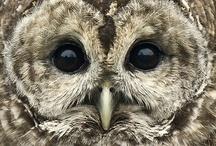Crazy for Owls! / by Amy Myrick