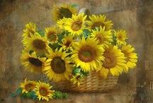 Sensational Sunflowers / by Amy Myrick