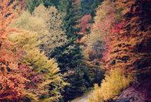 fall in love with fall / by Julianne Foard